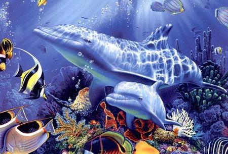 Diamond painting dolfijnen   Adembenemende schilderijen om zelf te maken!  #5