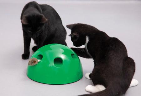 Pop n' Play kattenspeeltje | Het leukste speelgoed voor katten