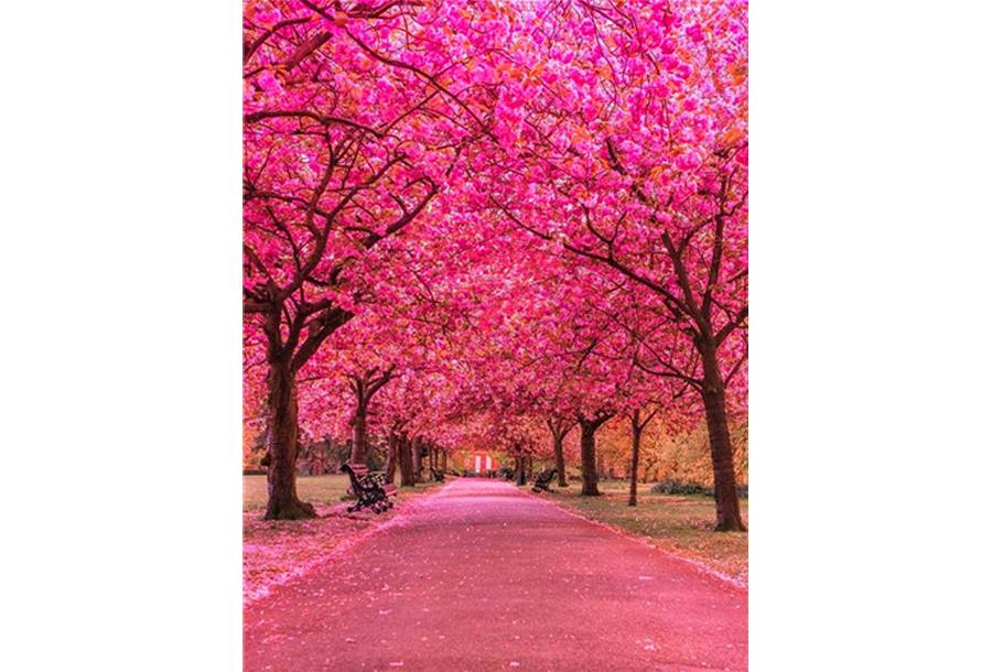 Diamond painting natuur #3 Roze bomen - 50 x 70 cm