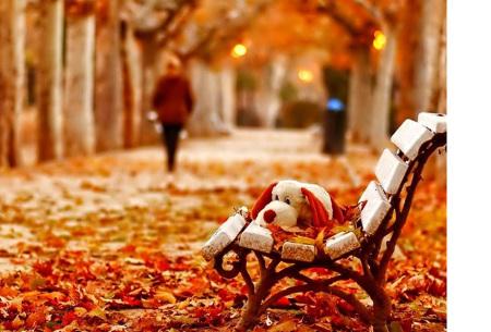 Diamond painting herfst pakket | De mooiste natuur en landschappen in najaarstinten #10