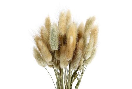 Hazenstaartjes droogbloemen boeket van 50 stuks | Kleurrijke gedroogde pluimen  Beige