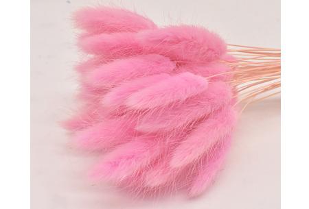 Hazenstaartjes droogbloemen boeket van 50 stuks | Kleurrijke gedroogde pluimen  Fel roze