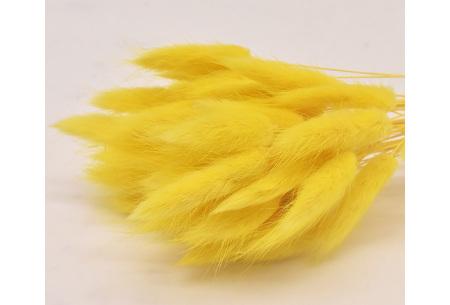 Hazenstaartjes droogbloemen boeket van 50 stuks | Kleurrijke gedroogde pluimen  Geel