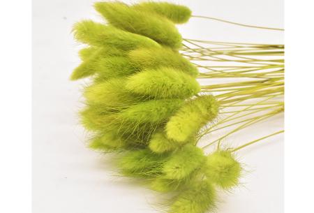 Hazenstaartjes droogbloemen boeket van 50 stuks | Kleurrijke gedroogde pluimen  Groen