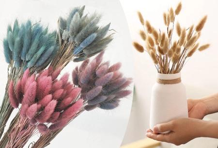 Hazenstaartjes droogbloemen boeket van 50 stuks | Kleurrijke gedroogde pluimen