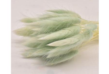 Hazenstaartjes droogbloemen boeket van 50 stuks | Kleurrijke gedroogde pluimen  Lichtgroen