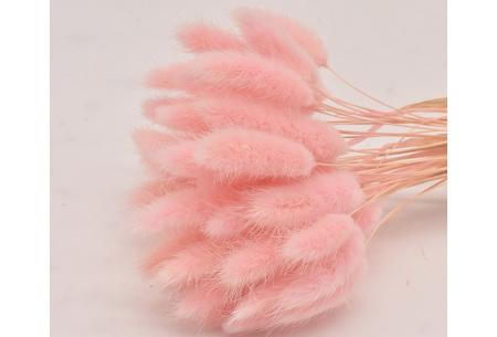Hazenstaartjes droogbloemen boeket van 50 stuks | Kleurrijke gedroogde pluimen  Lichtroze