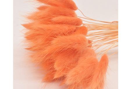 Hazenstaartjes droogbloemen boeket van 50 stuks | Kleurrijke gedroogde pluimen  Oranje