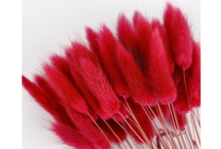 Hazenstaartjes droogbloemen boeket van 50 stuks | Kleurrijke gedroogde pluimen  Rood