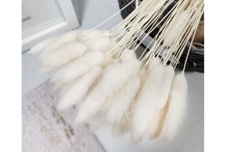Hazenstaartjes droogbloemen boeket van 50 stuks | Kleurrijke gedroogde pluimen  Wit