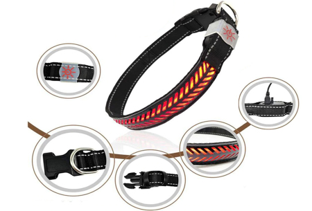 Hondenhalsband met licht | Lichtgevende halsband in 4 kleuren