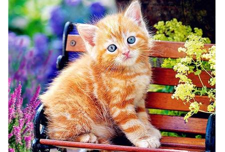 Diamond painting katten | Maak zelf de mooiste schilderijen  #1