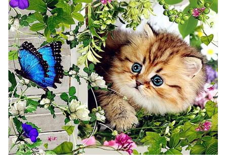 Diamond painting katten | Maak zelf de mooiste schilderijen  #4