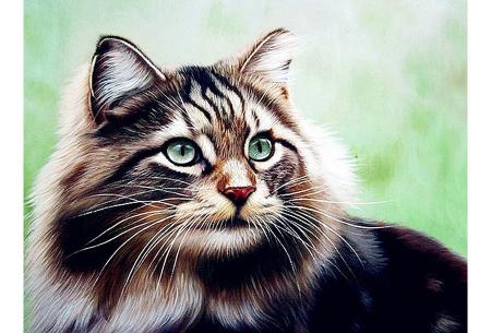 Diamond painting katten | Maak zelf de mooiste schilderijen  #7