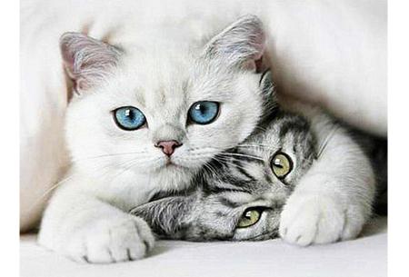 Diamond painting katten | Maak zelf de mooiste schilderijen  #9