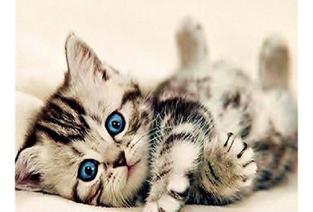 Diamond painting katten | Maak zelf de mooiste schilderijen  #10