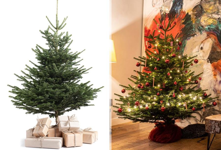 Nordmann kerstboom nu heel goedkoop