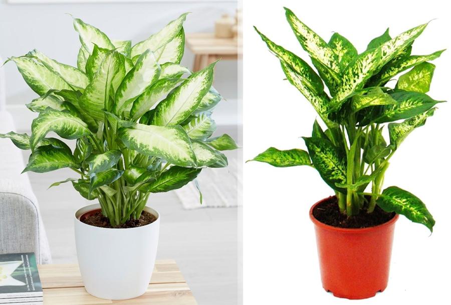 Luchtzuiverende planten in de aanbieding