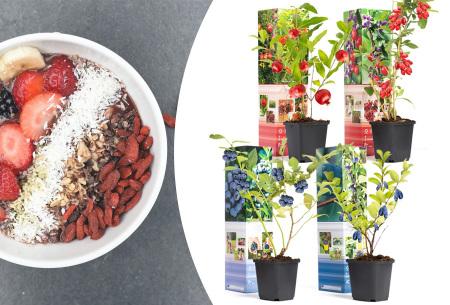 Superfoods fruitplanten - set van 4 of 8 | Goji bes, honingbes, blauwe bes en granaatappel boompjes