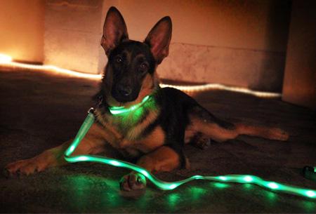 LED hondenriem in 7 kleuren t.w.v. €19,95 nu GRATIS!