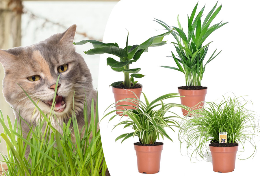 Set van 4 diervriendelijke kamerplanten