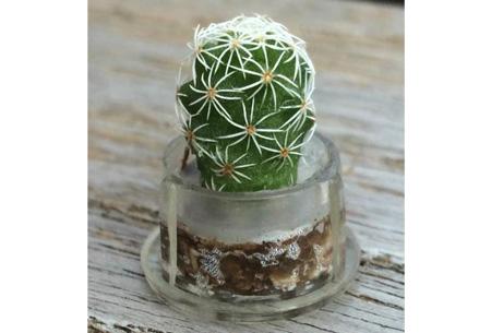 Pettree nu gratis levende mini cactus in een sleutelhanger - Fotos van levende ...